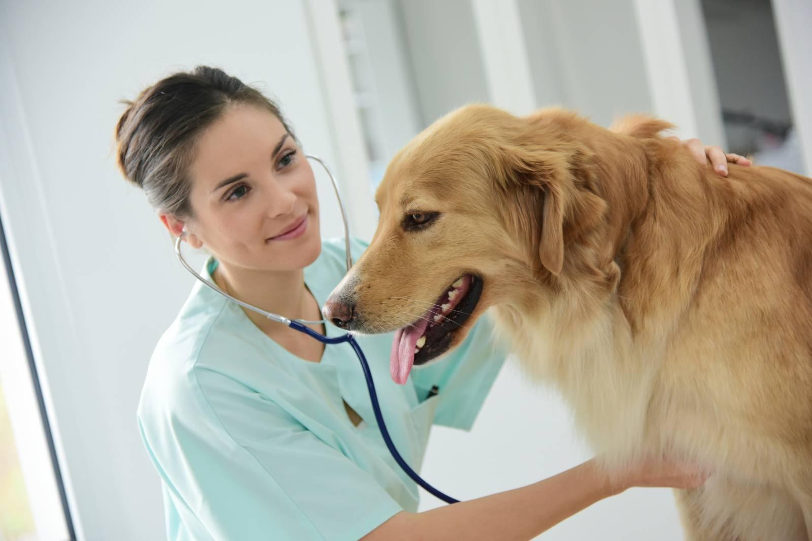 Visites vétérinaires à domicile sur La Ciotat, Ceyreste, Cassis